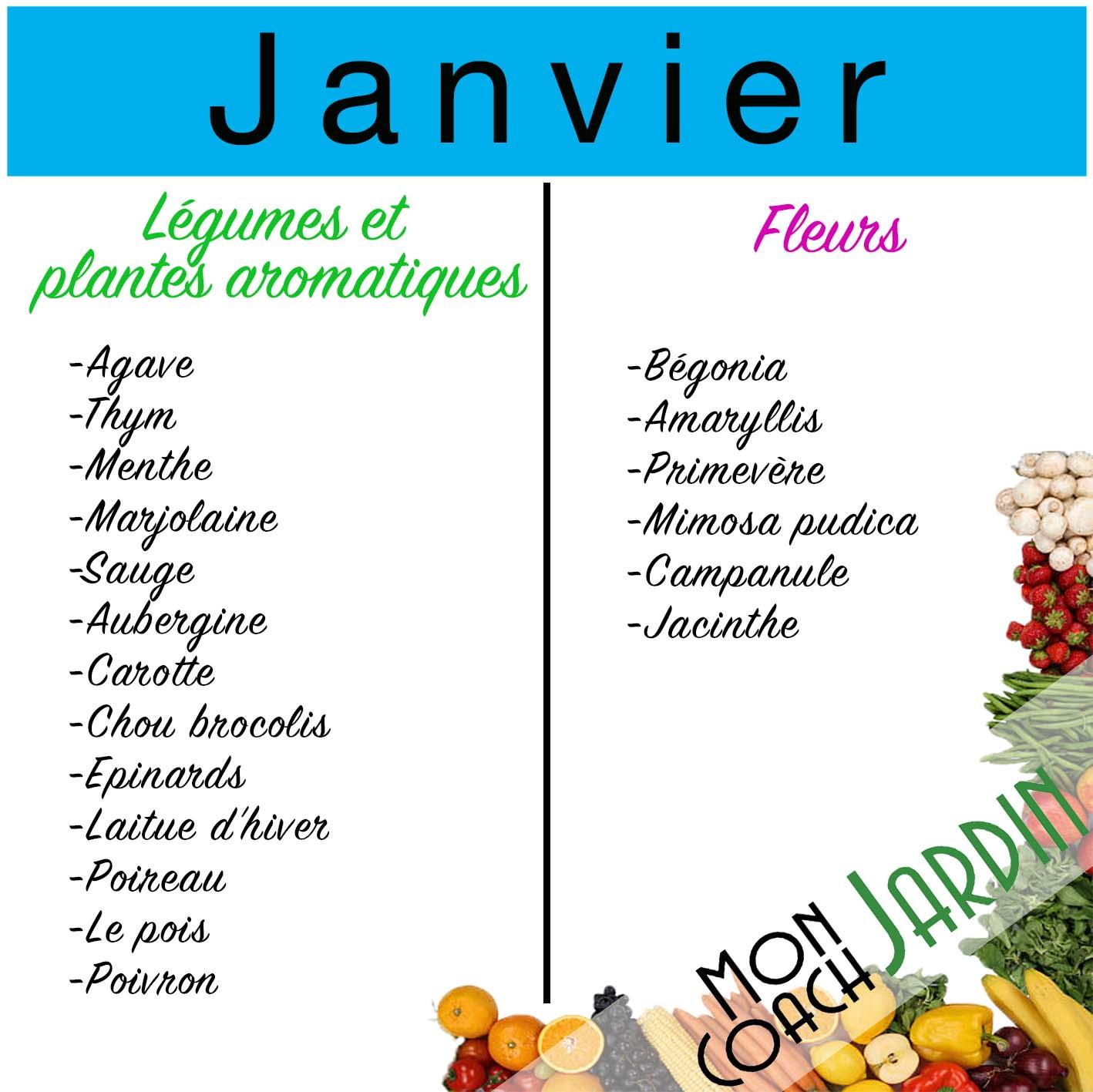 Légumes à planter en janvier