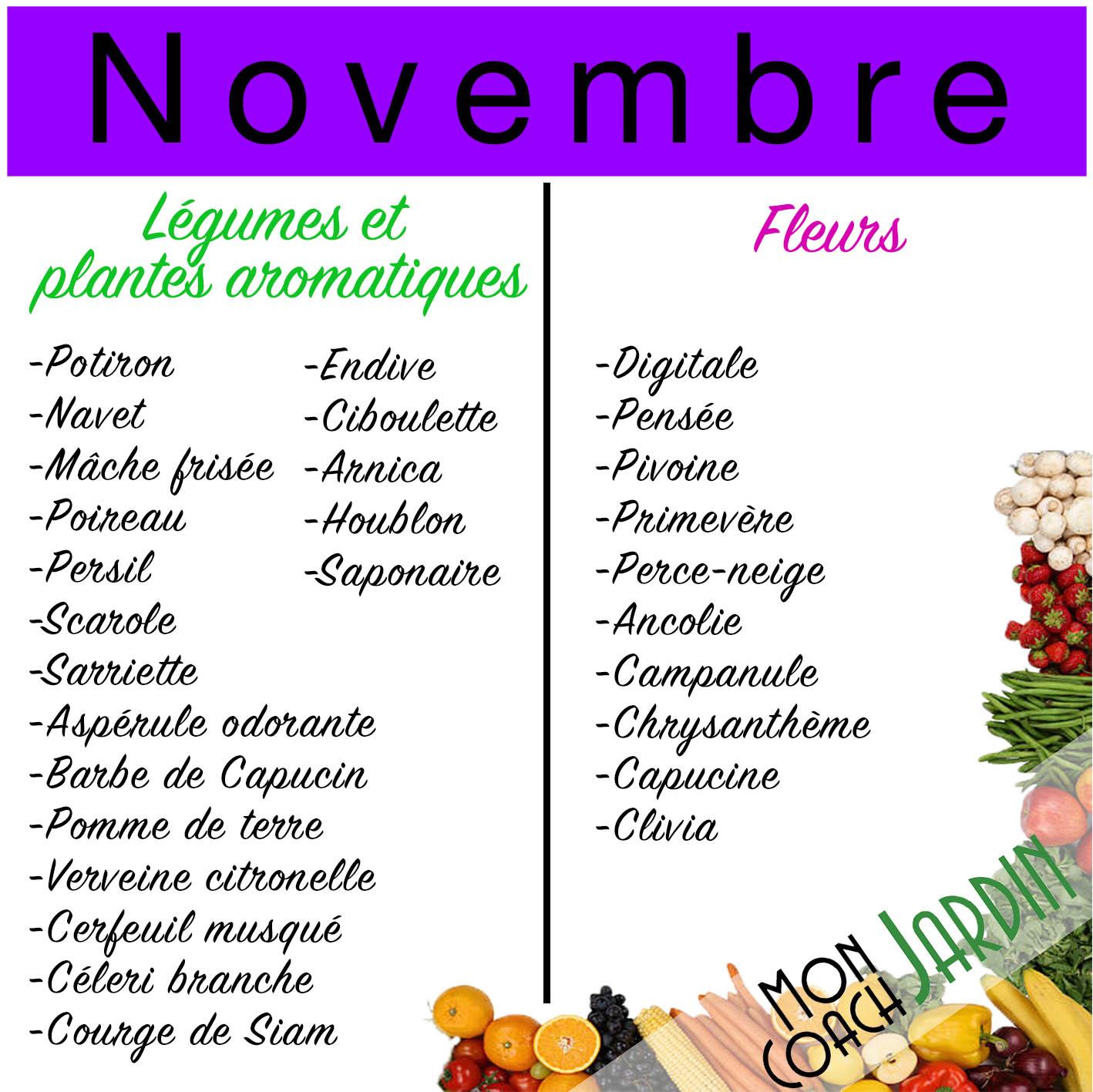 Légumes à planter en novembre