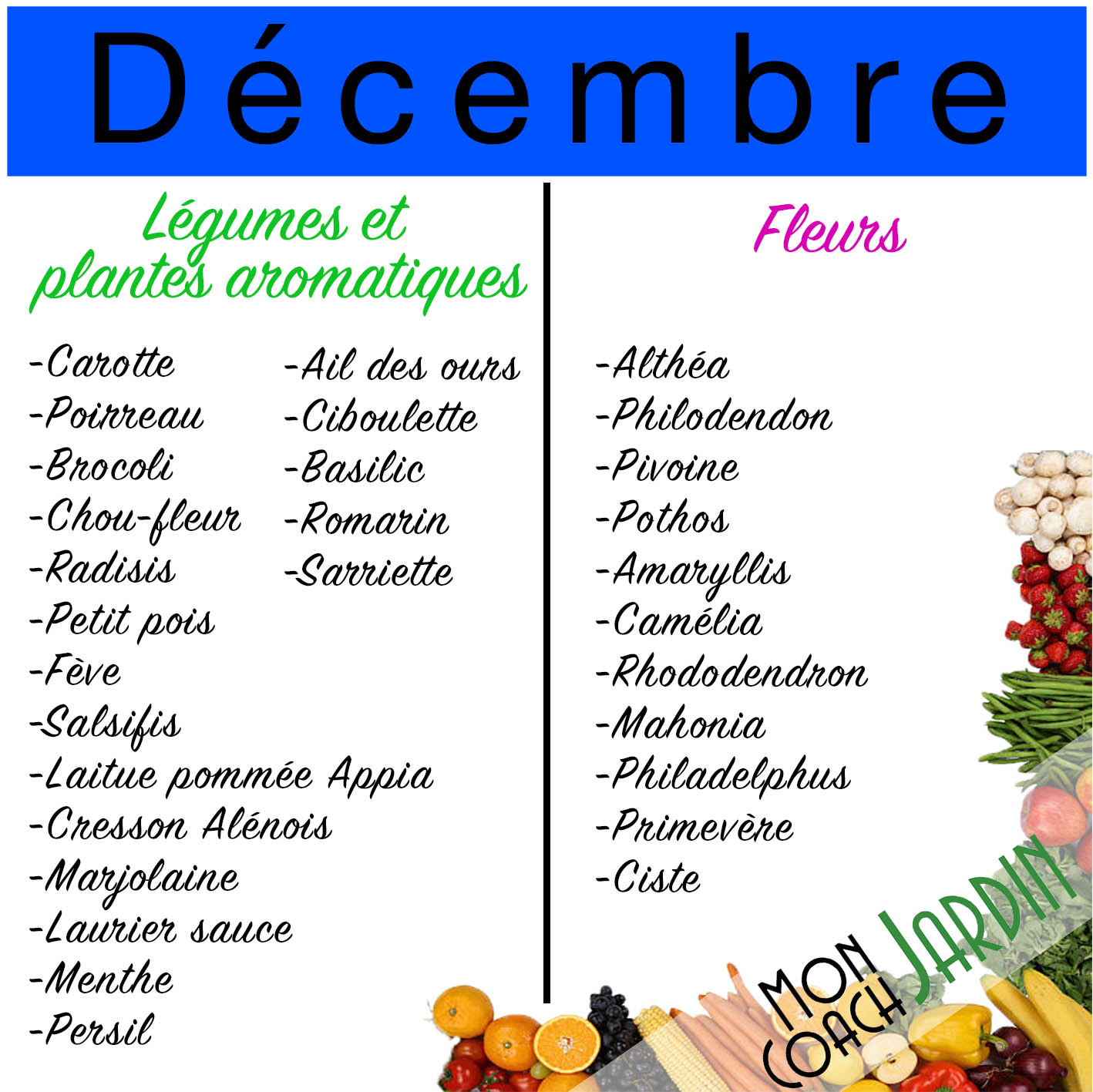 Plantes aromatiques à planter en décembre