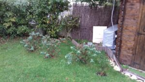 Coaching jardinage Gaby 7