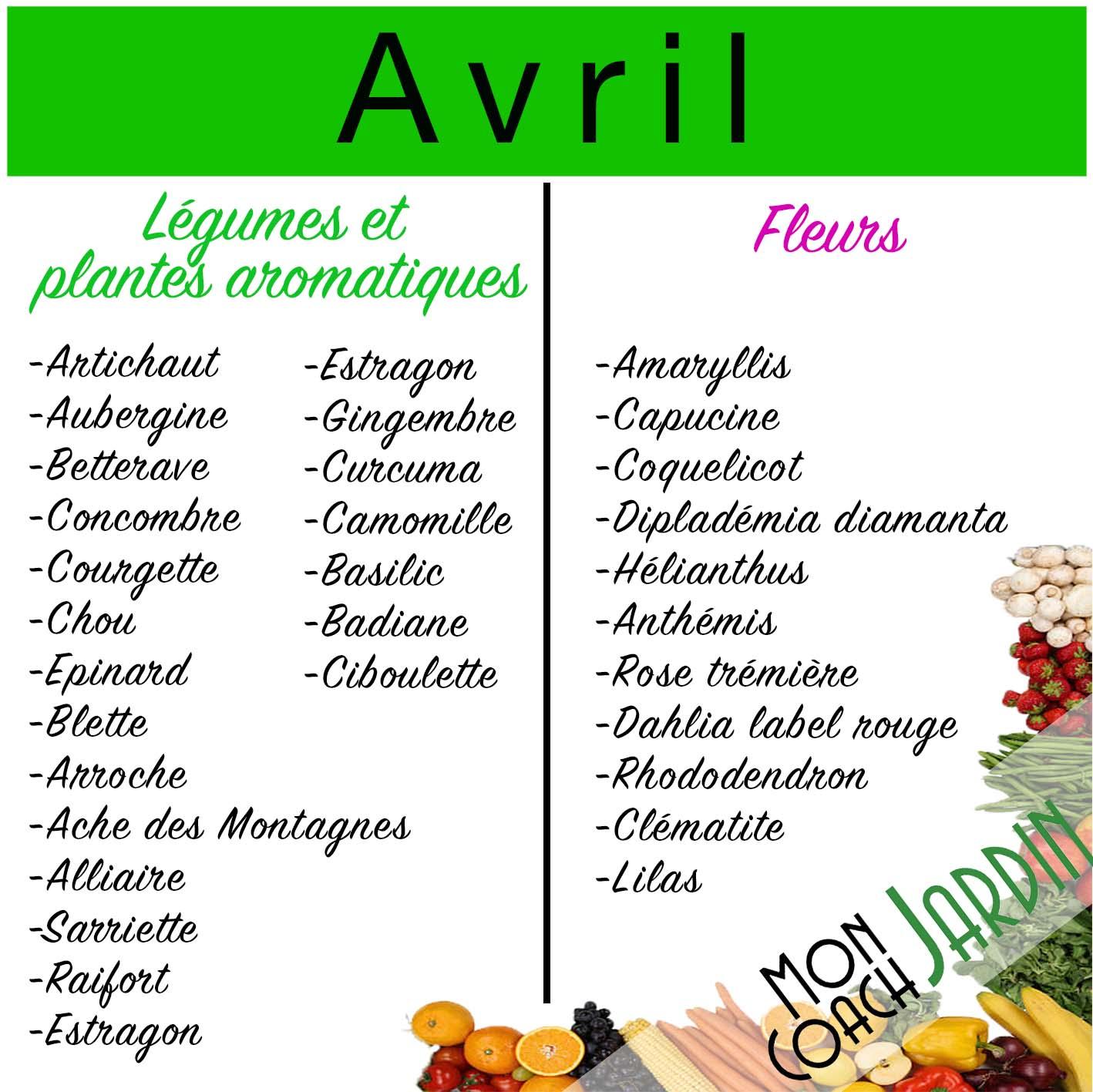 Légumes à planter en avril
