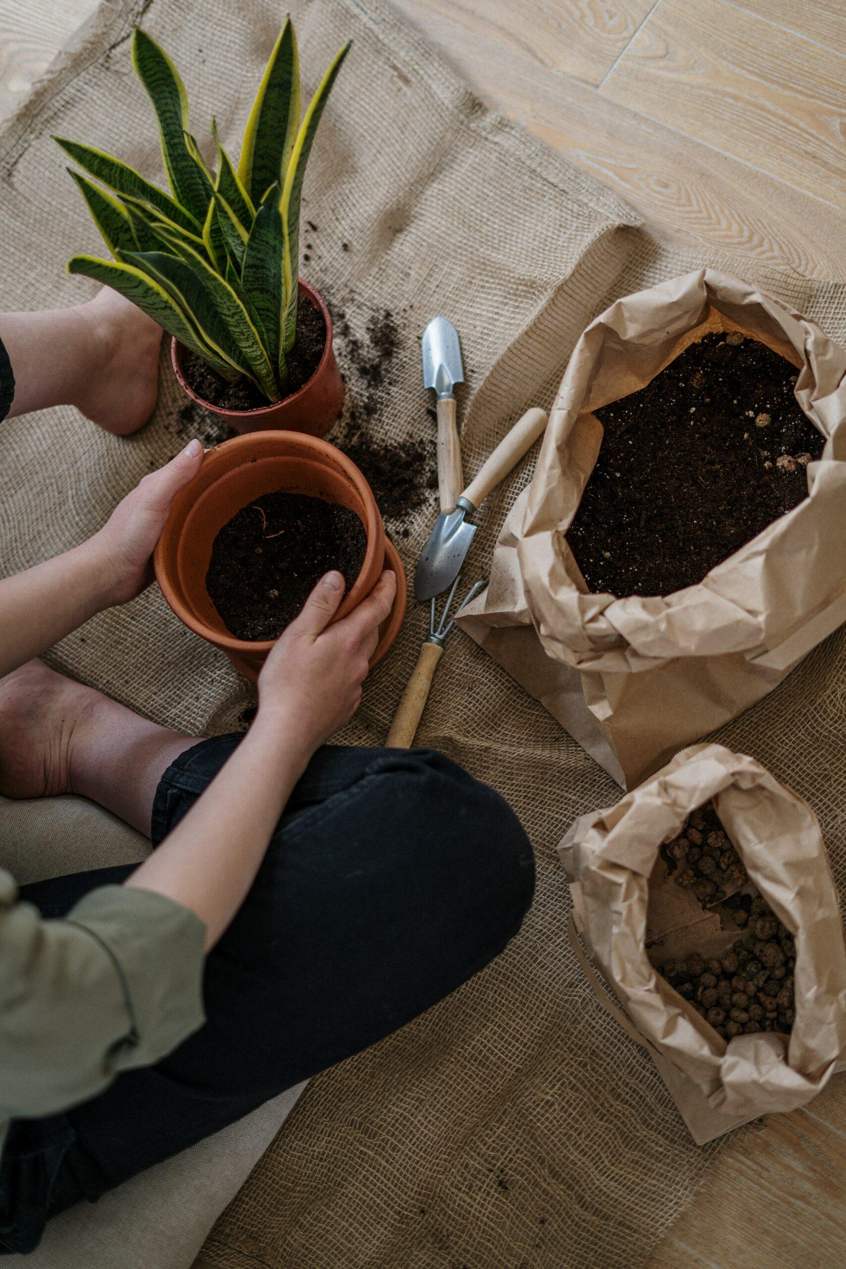 rempoter les plantes d'intérieur